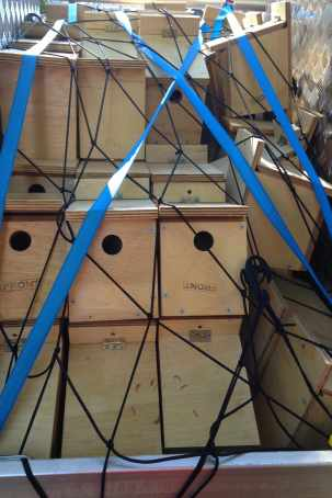 SparrowNestboxes