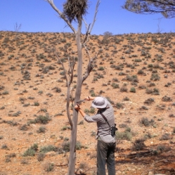 Treetagging